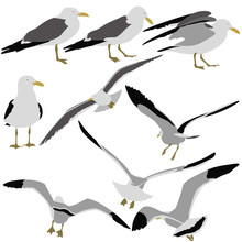 Set Black Silhouettes Of Seagulls On White Background.