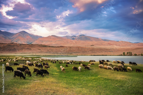 Fotografie, Obraz  A herd of sheep and goats grazing near the lake at the foot of t