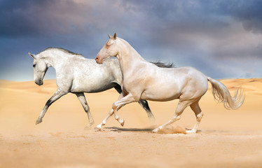 Group of horse run on desert