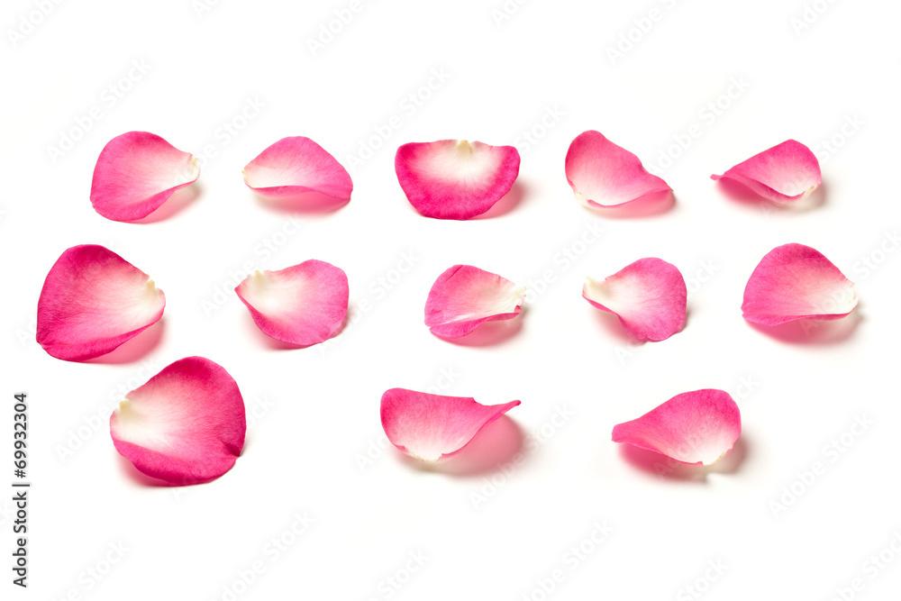 Fototapeta Pink rose petals isolated