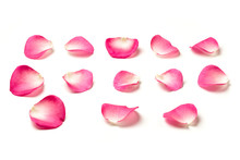 Pink Rose Petals Isolated