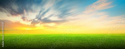 Foto op Aluminium Geel Field of green grass and sky
