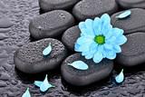 Fototapeta Kamienie - Margerytka na kamieniach bazaltowych