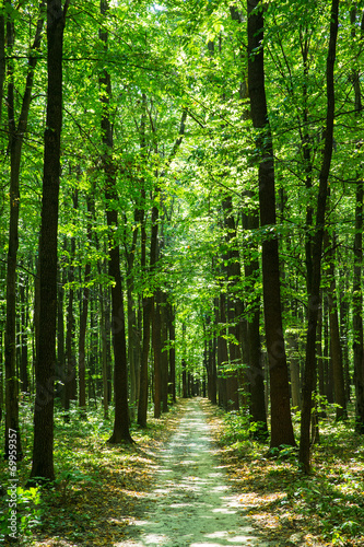 green forest - 69959357