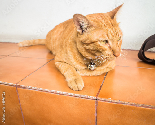 Keuken foto achterwand Kat Portrait of brown-eyed cat