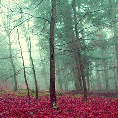 Fototapeta Drzewa Mystic color forest