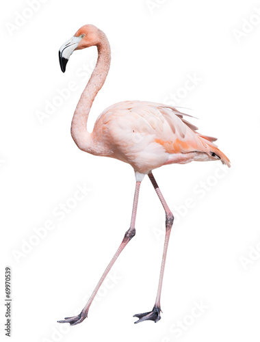 Staande foto Flamingo pink flamingo. Isolated over white