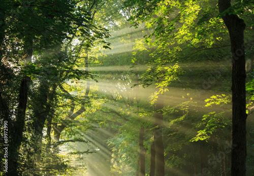 Keuken foto achterwand Bossen Sunlight breaking through the trees.