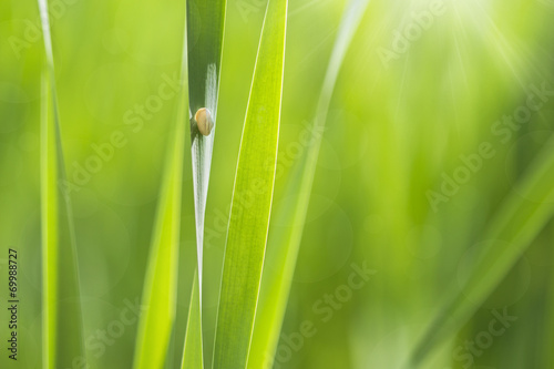 sunny background snail in a green grass
