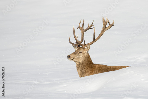 Recess Fitting Deer Deer on the snow background