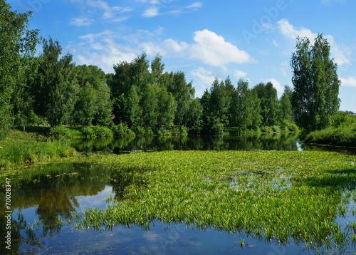 Fototapeta Summer nature, scenery obraz na płótnie