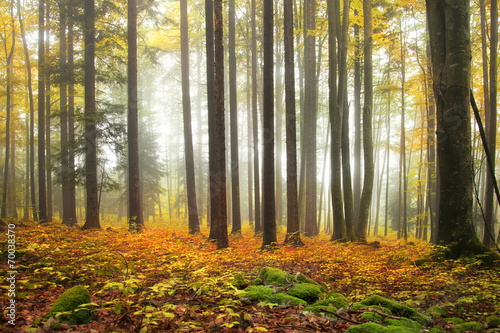 autumn-color-forest