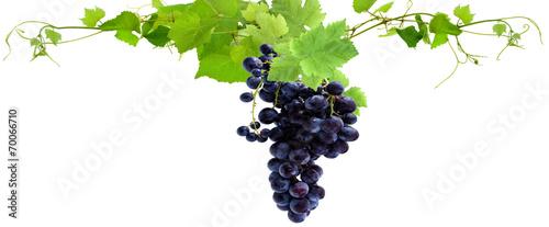 Fototapeta grappe de raisin rouge et feuilles de vigne obraz