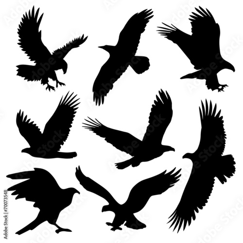 Eagle Silhouettes Canvas Print