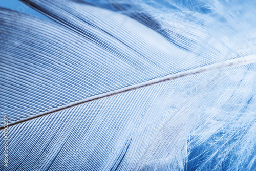 feather close up - macro detail