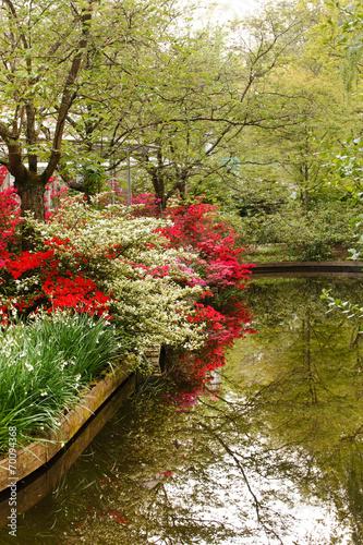 Fototapety, obrazy: japanese garden
