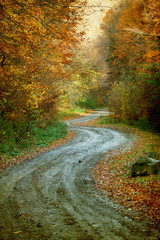 FototapetaCurving road in autumn forest