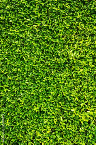 zielone-liscie-sciany-tla