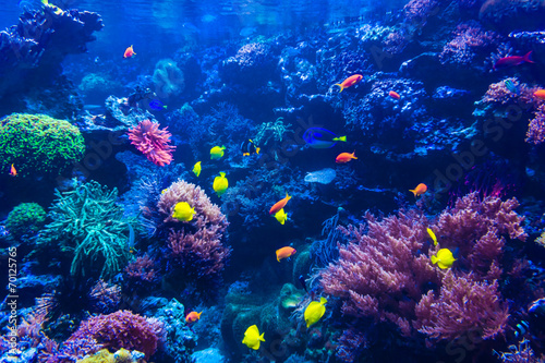 In de dag Koraalriffen tropical fishes meet in blue coral reef sea water aquarium . Und