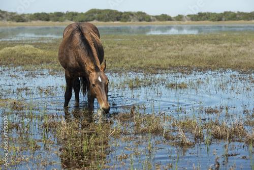Fotografija  Wild horse eating