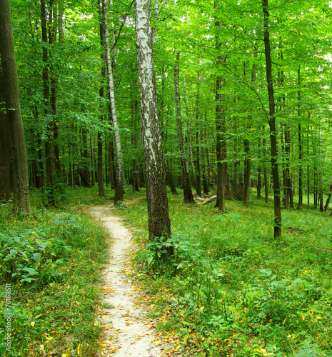 Aluminium Prints Bestsellers green forest