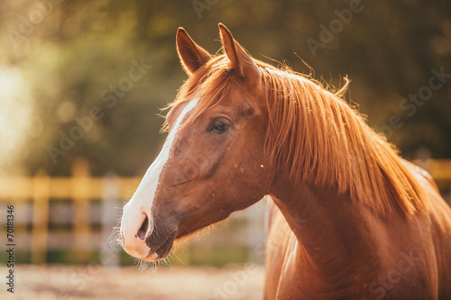 Foto op Aluminium Paarden horse in the paddock, Outdoors