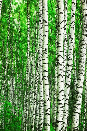 las-brzozowy