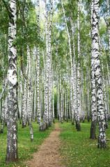 Obraz Pathway in autumn burch forest