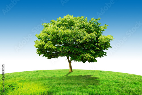 one tree grass and sky Poster