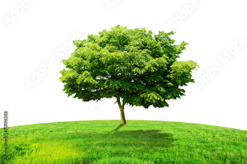 one tree and grass Poster