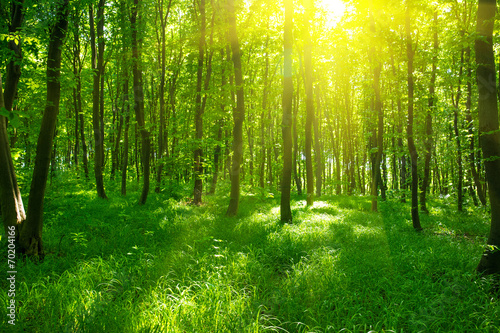Papiers peints Forets Sunlight in the green forest, spring time