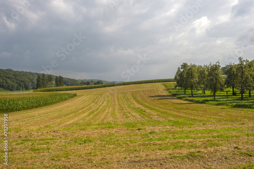 Foto op Aluminium Purper Fruit trees and corn in a field in summer