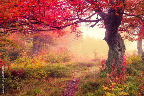 Obraz autumn forest - fototapety do salonu