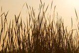 Grass Silhouette Sepia
