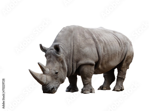 Photo sur Aluminium Rhino Rhino