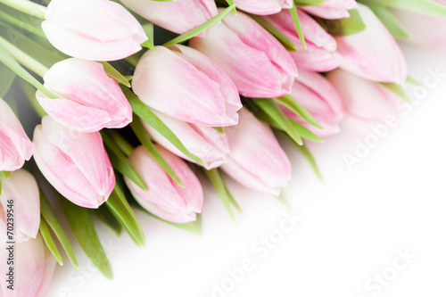 Garden Poster Floral Bunch of pink tulips on white background