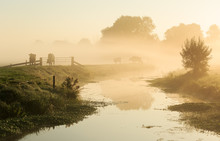 Foggy, Dutch Landscape With Cows On A Dike.