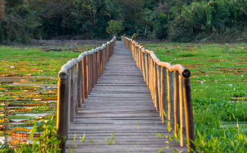 Fotografija  Brazilian Panantal, Victoria Regia plant and wooden footbridge