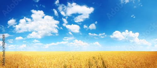 Foto auf Gartenposter Landschappen Wheat field and blue sky with white clouds