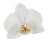 Biała tropikalna orchidea na białym tle