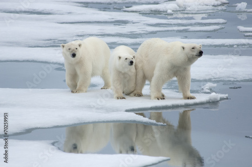 Tuinposter Ijsbeer Polar Bear& Two Yearling Cubs