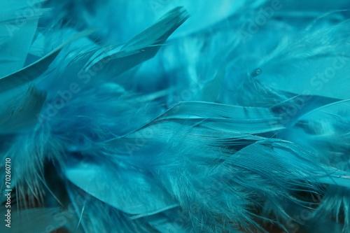 plumes bleu turquoise devet tout doux plumes de dinde