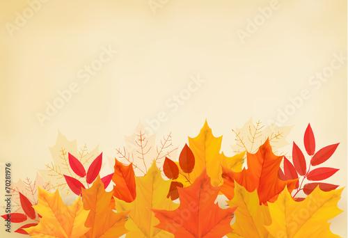 Fototapeta Abstract autumn background with colorful leaves. Vector illustra obraz na płótnie
