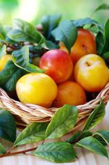 Ripe yellow plums
