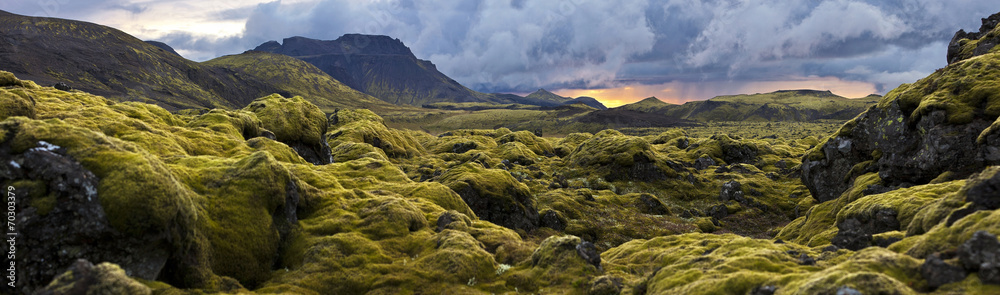 Fototapety, obrazy: Surreal landscape with wooly moss at sunset in Iceland