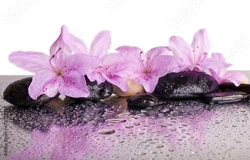 kwiaty-i-czarne-kamienie-z-refleksji