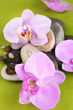 Composition with orchid flowers and stones in water