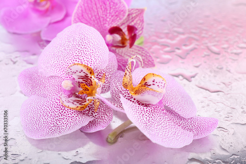 Yellow tropical orchid flowers isolated on white