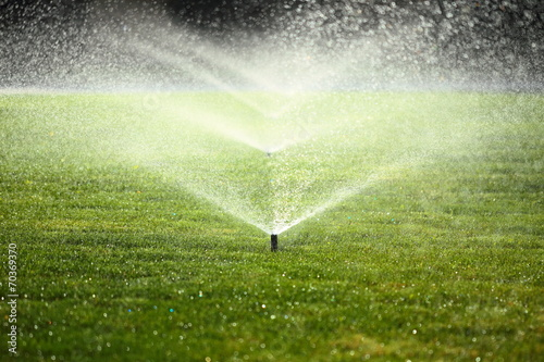 Fotobehang Tuin garden sprinkler on the green lawn