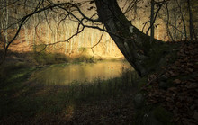 Sunset Light On A Lake In Forest With Dark Tree